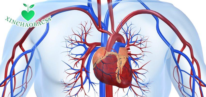 Bệnh tim mạch và những thông tin không thể bỏ qua